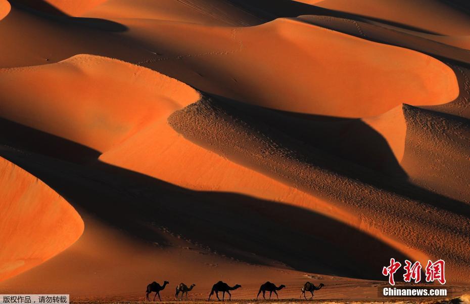 阿联酋沙丘节:牵骆驼漫步沙丘美如画
