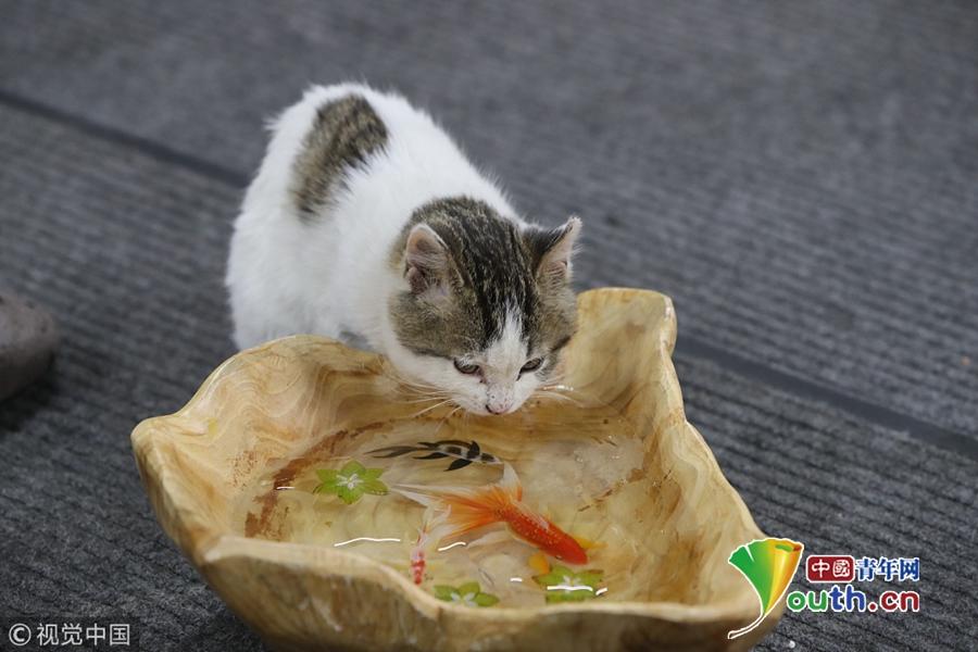 """西安大学生创业画鱼""""气死猫"""""""