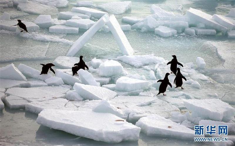 南极风光 可爱生灵