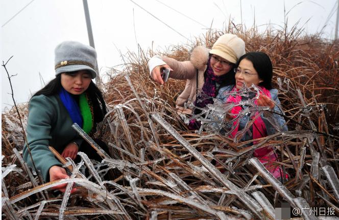 广东韶关现新年第一场雾凇冰挂景观