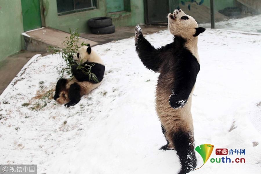 雪景美如画 冰天雪地里小动物们蠢萌搞笑