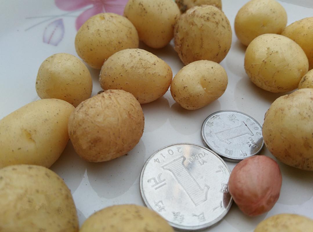 甘肃定西:小土豆的72般变化