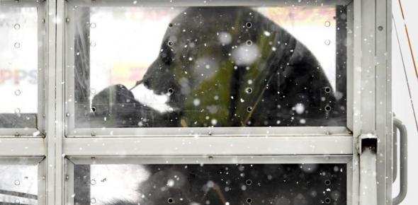 中国大熊猫雪中抵达芬兰首都 开启15年旅居生活