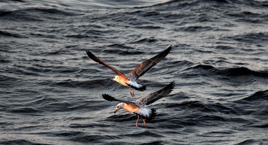 探秘北印度洋莫克兰海沟
