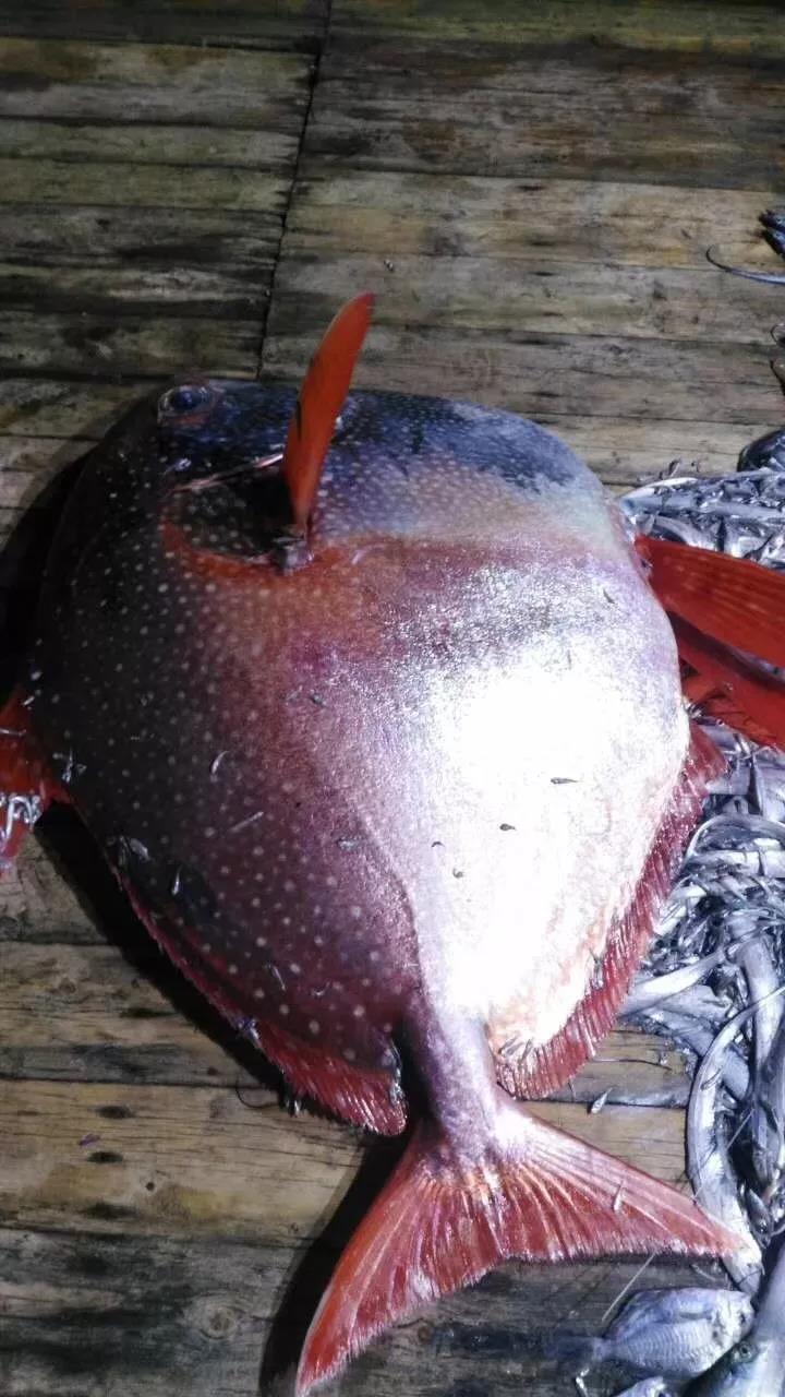 渔民捕200斤怪鱼被老总买走:捡到宝了