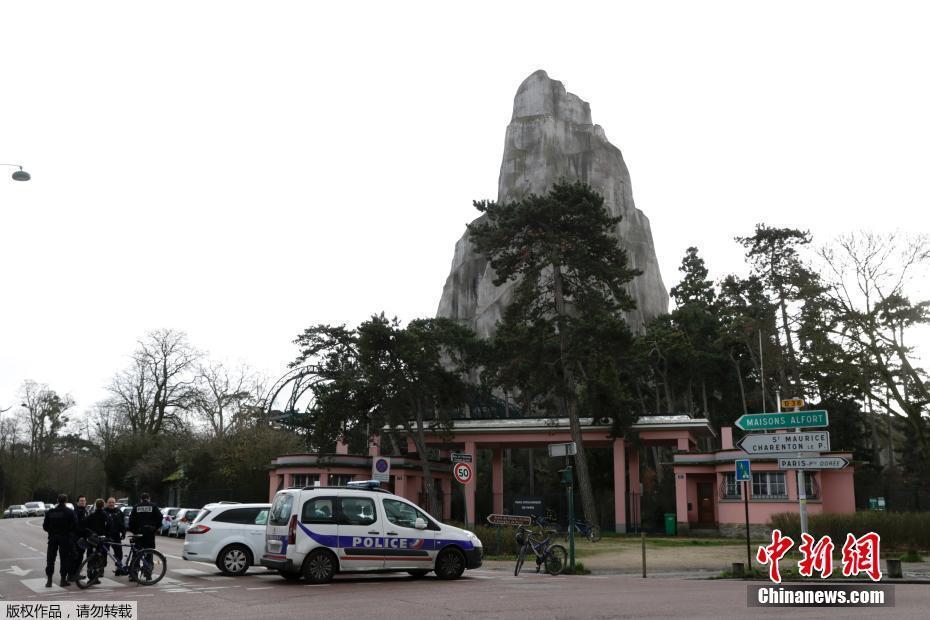 """50只狒狒集体""""越狱"""" 巴黎一动物园紧急关闭"""