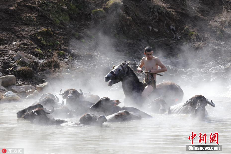 惬意!土耳其牛马冬日泡温泉享受温暖