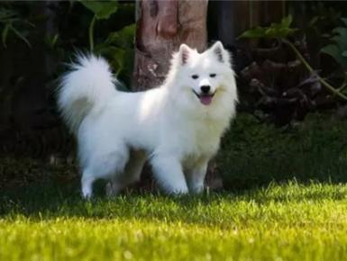 """狗年话狗:这十种狗狗的""""老家""""在德国"""