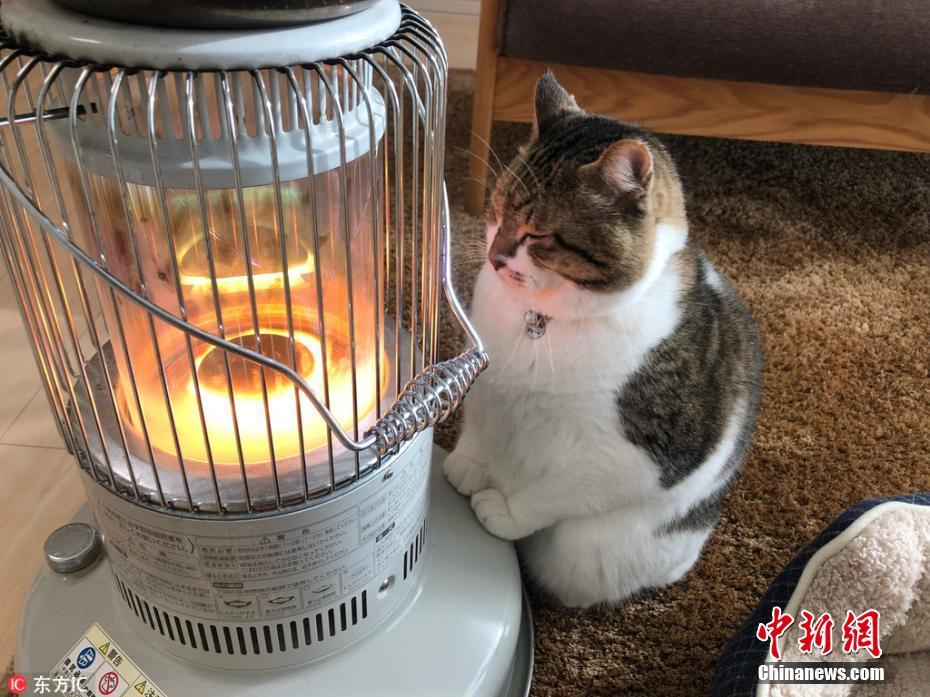 """萌猫钟爱烤火吸粉无数 """"守护""""暖气寸步不离"""
