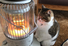 萌猫钟爱烤火吸粉无数