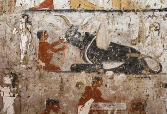 埃及发现4400年前女祭司墓