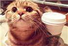 你猫就是爱好温暖