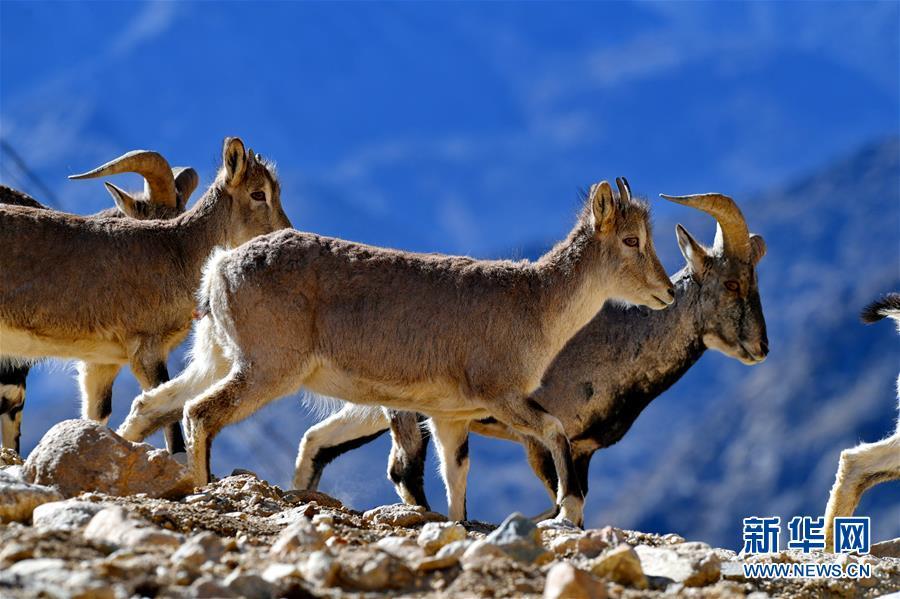 珠峰保护区:野生动物的栖息乐园
