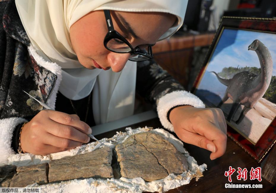 埃及出土白垩纪恐龙化石