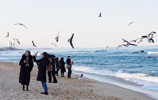 강릉 안목커피거리 해변 동계올림픽 빙상경기가 열리는 강릉 안목커피거리 해변에서 관광객들이 사진을 찍으며 즐거워하고 있다.