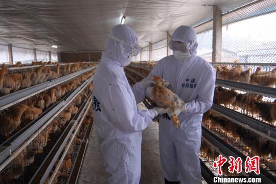 春节期间惠州1800吨鲜活农产物安全顺畅供港澳