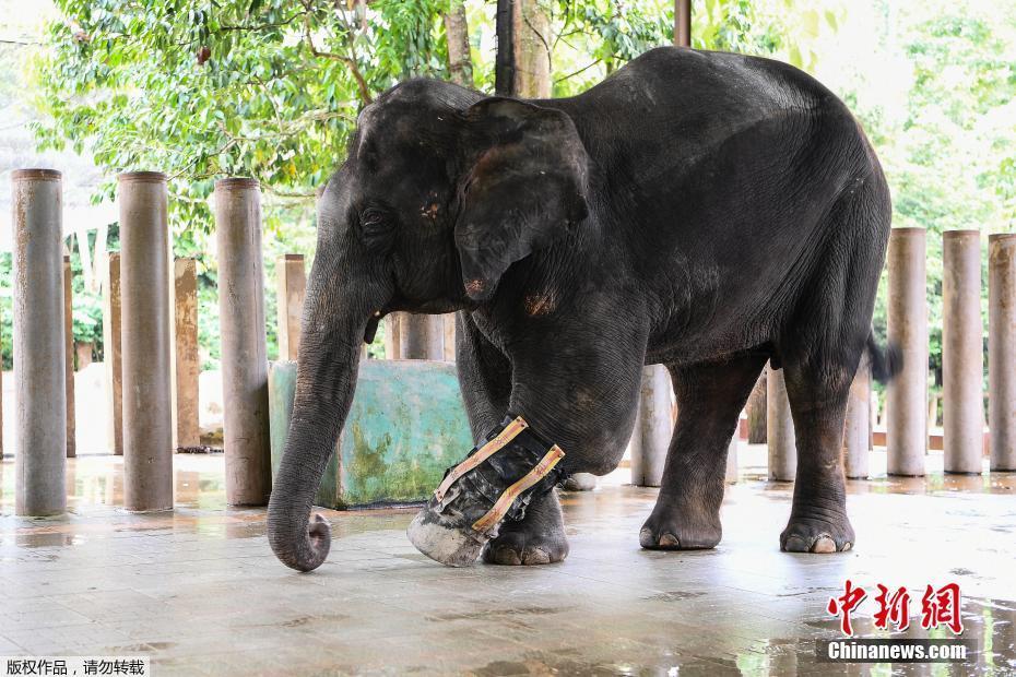 """马来西亚13岁""""象坚强""""装上义肢重新行走"""