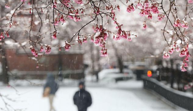 """纽约降下15年来最大""""四月雪"""""""