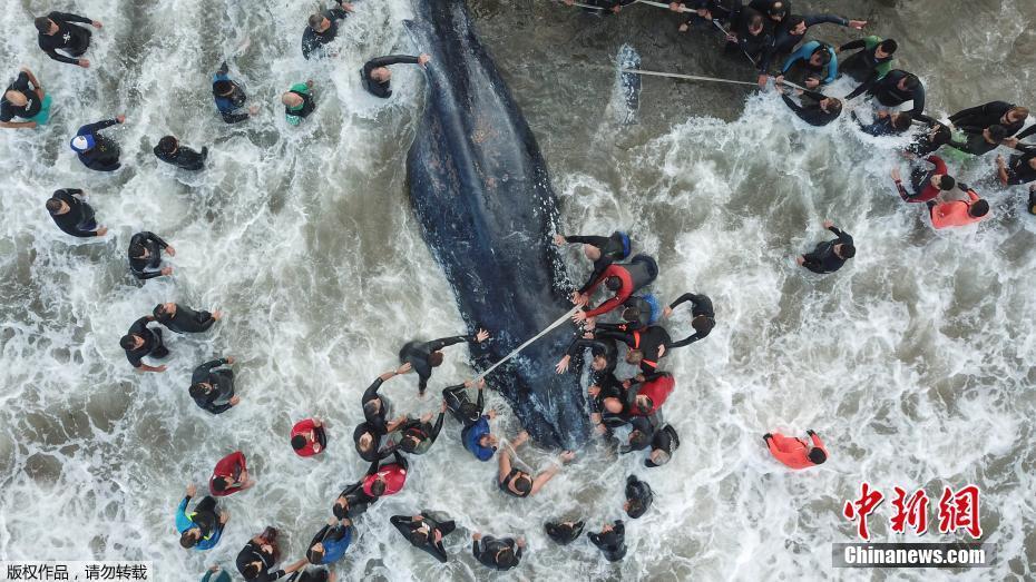 阿根廷旅游胜地现搁浅鲸鱼 民众救助但无力回天