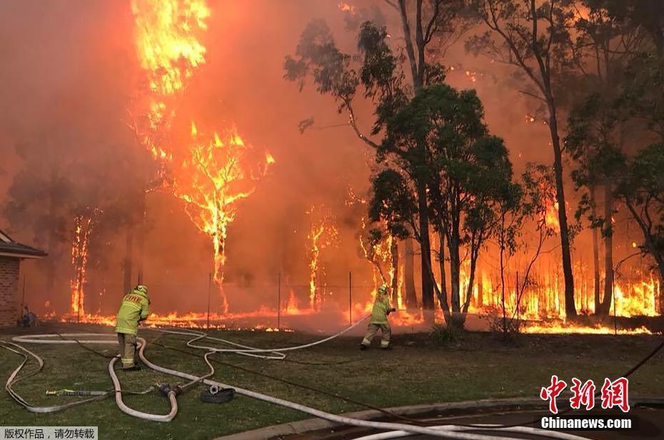 悉尼西南部发生山火浓烟弥漫 消防员救出考拉