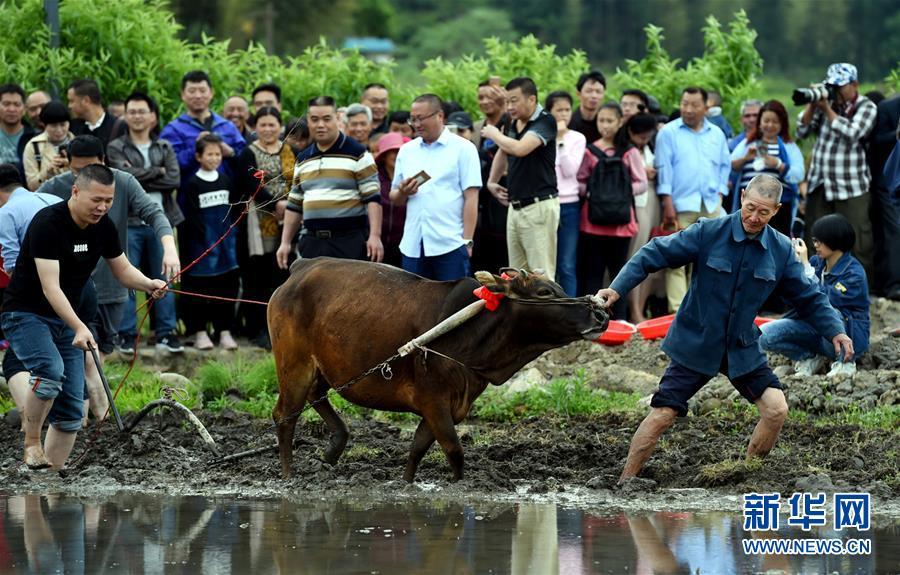 福建连城:客家春耕节传承农耕文化