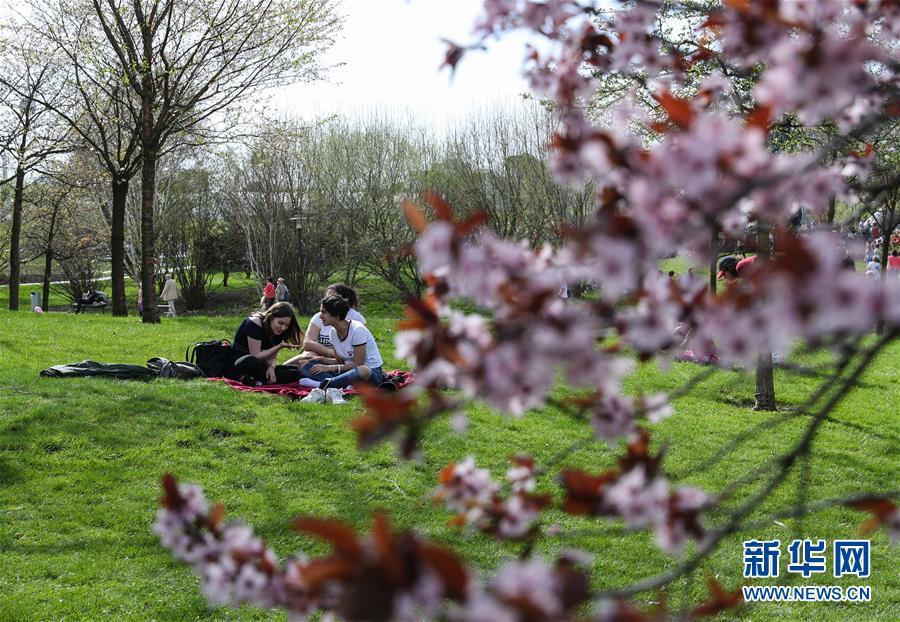 柏林举办第12届樱花节