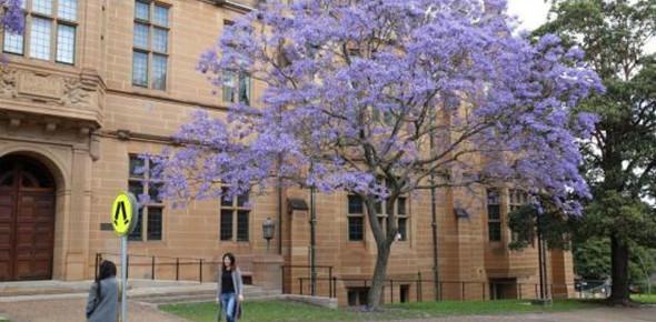 澳今年留学生人数突破50万 中国学生增31%