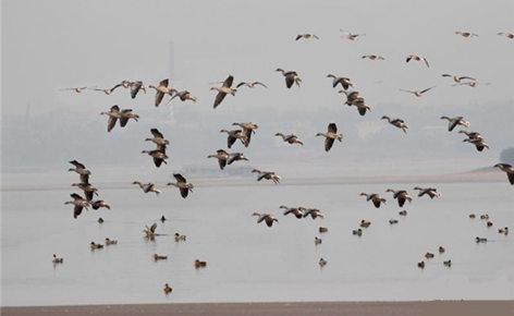 西洞庭湖湿地保护罕见一幕:林子小了,才什么鸟都有!