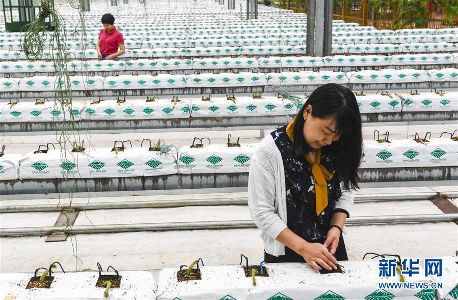 河北文安:发展现代农业 助力乡村振兴