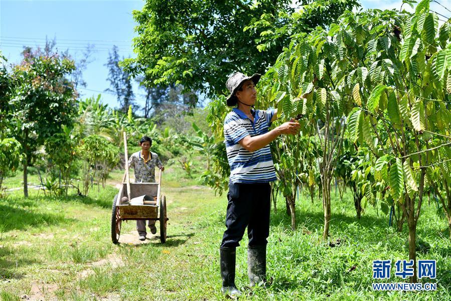 海南万宁:咖啡产业助推经济发展