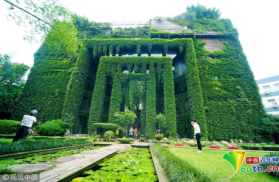 盘点那些爬山虎造就的风景 宛如绿色城堡