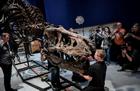 巴黎展最完整霸王龙化石