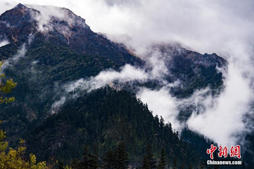 西藏林芝南伊沟雨后宛如水墨画卷