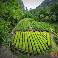 武夷茶文化传承和传播