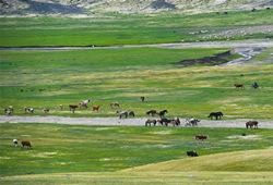 内蒙古草原进入全面返青期