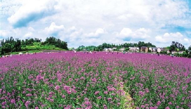 重庆市南川区发展全域旅游经济 打造田园风光