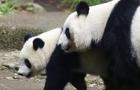香香与妈妈遛弯动作同步