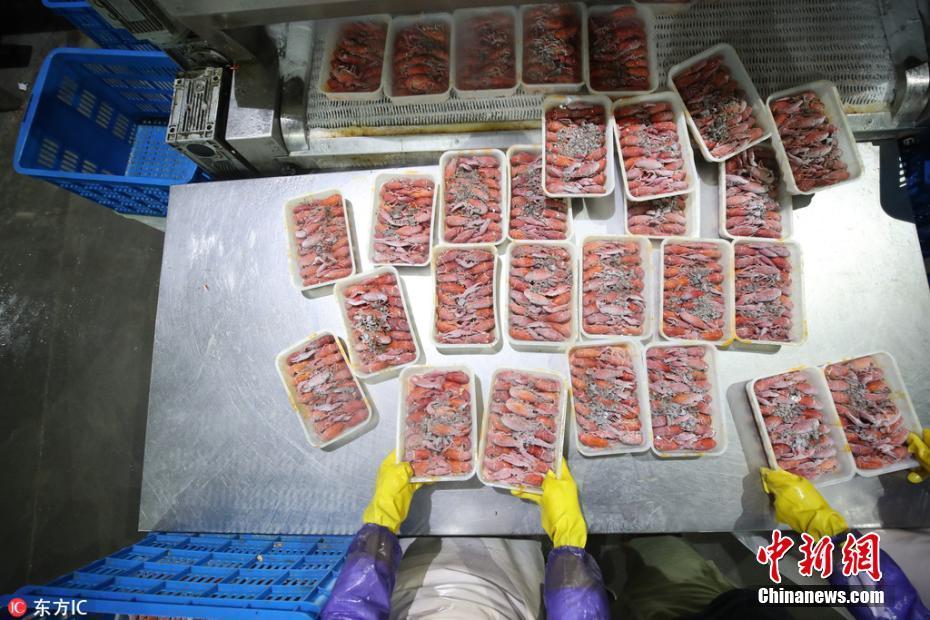 10万只小龙虾搭专列出征世界杯 蒜香麻辣口味任选