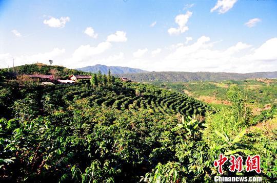 云南将在全国布局10万台自助咖啡机扶贫咖农