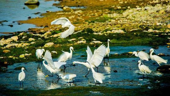 济南玉符河湿地生态环境优渥引白鹭栖息