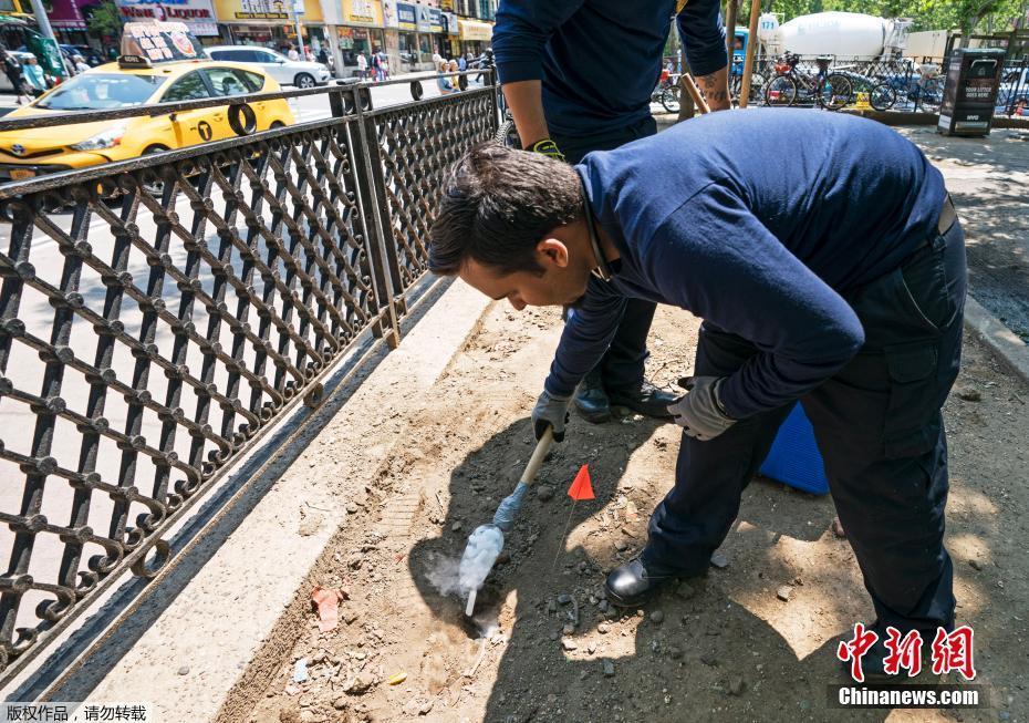 """美纽约为灭鼠祭出""""新武器"""" 高效快速且对环境无害"""
