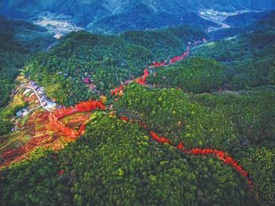 龙栖山,森林体验的新标杆