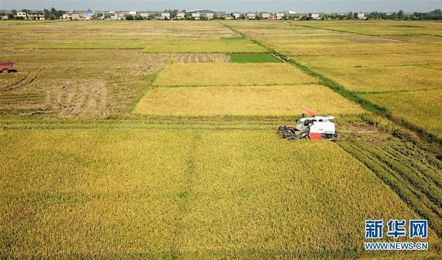 江西南昌:抢收早稻