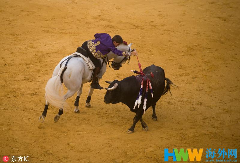 西班牙举行马背斗牛赛 人牛共演华丽杀戮