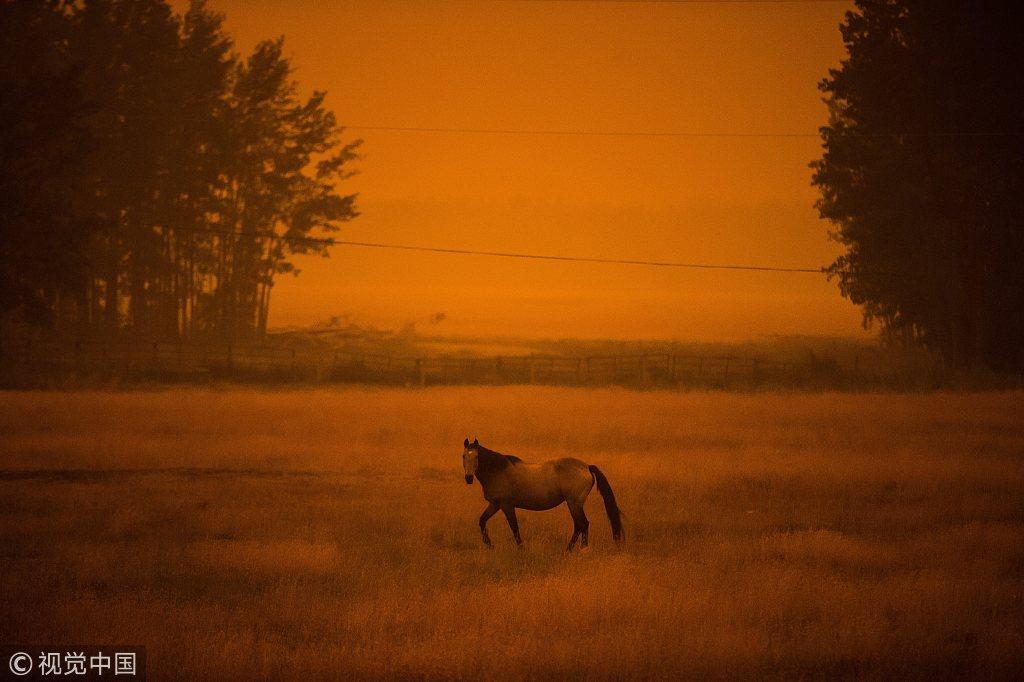 加拿大山火肆虐浓烟笼罩 村庄白天似黄昏