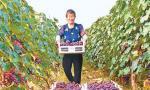 山东淄博:葡萄熟了