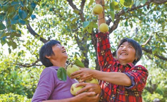 调整农业产业结构 发展高效生态农业
