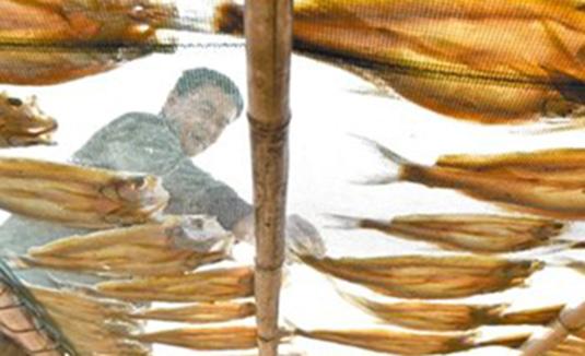 安徽巢湖:加工鱼干