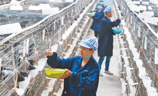 江西吉安:以创业带动就业