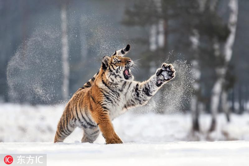 当动物遇上了雪 尽情撒欢萌态百出